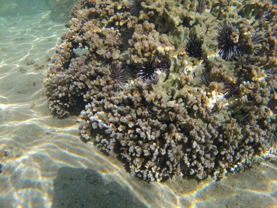 coral and sea urchins