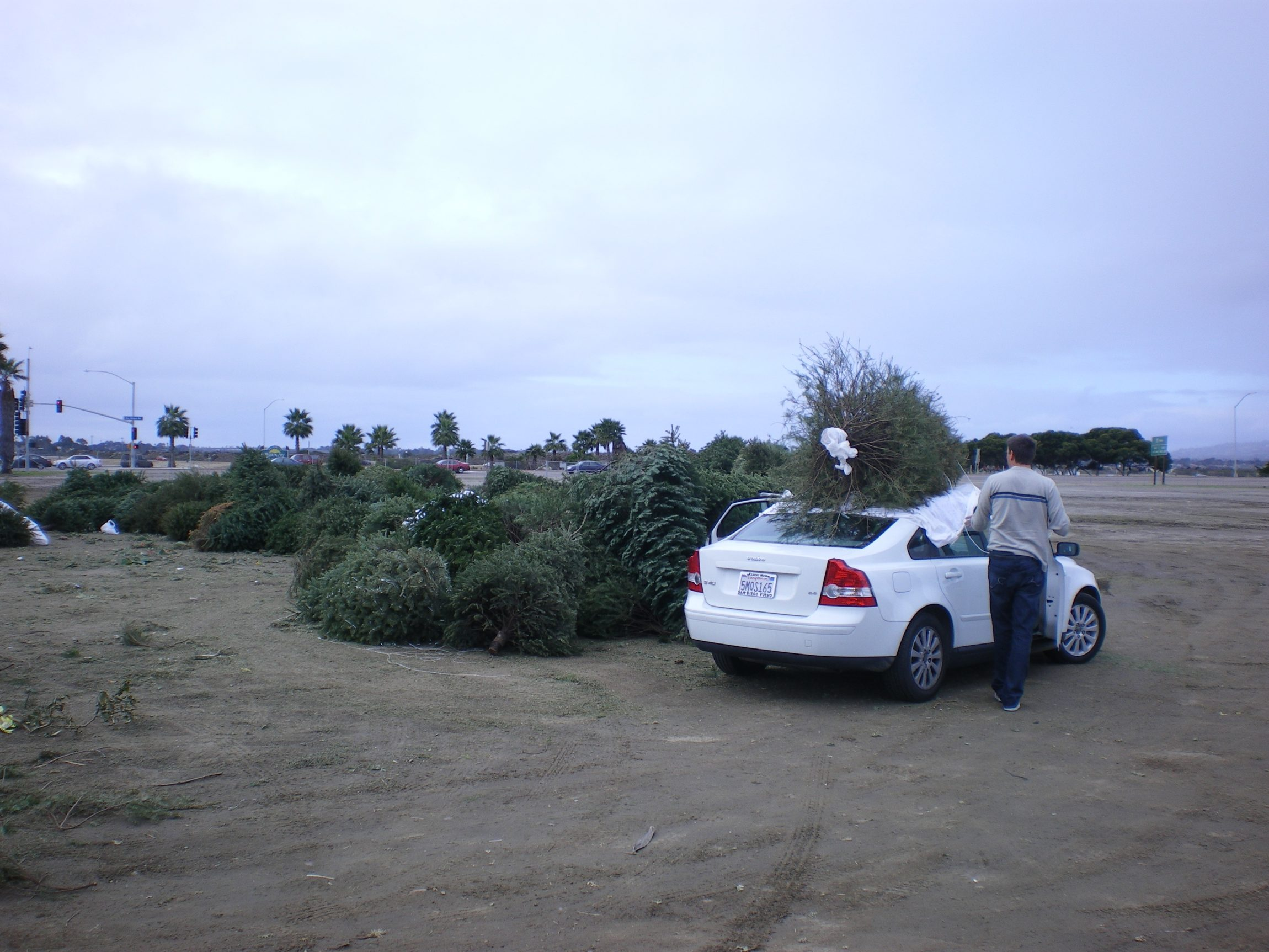 Beyond Wrapping Paper: Recycle Your Tree Too!