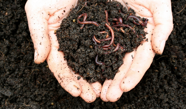Composting blog pic 2 (worms)