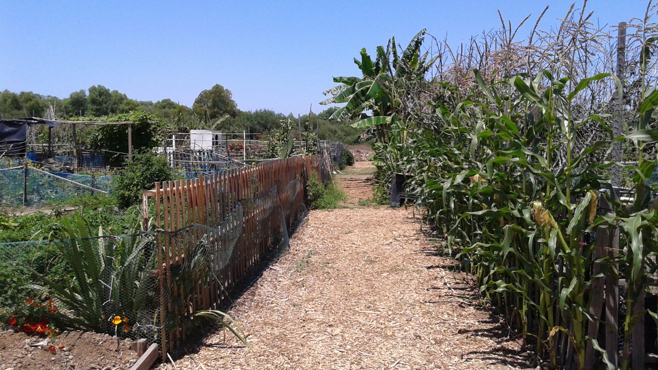 Garden and alley