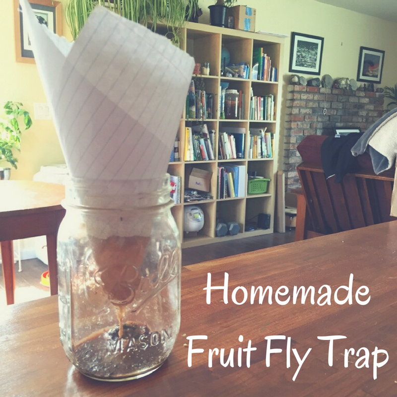 Ball_Homemade Fruit Fly Trap